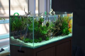 keep your aquarium clean and healthy