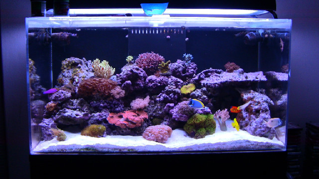 types of fish tanks - saltwater aquarium