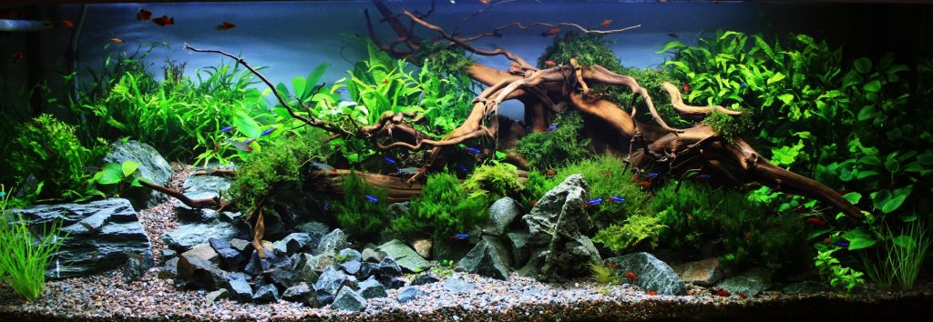 Aquarium Maintenance Guidelines For Beginners