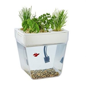 Best Betta Fish Tanks Best Home For Your Betta