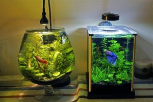 How to take care of a betta fish best betta fish tank for Betta fish water temp