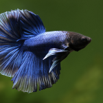 Best Betta Fish Tanks – Best Home For Your Betta