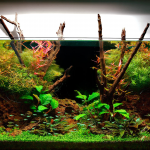 Best Fish for 10 Gallon Tank Setup – Which Fish You Should Choose