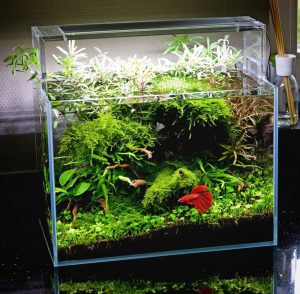 How to take care of a betta fish best betta fish tank for How to keep fish tank clean without changing water