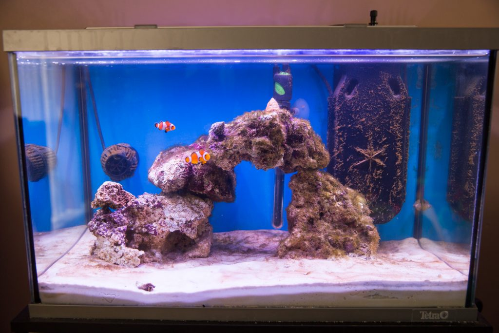 Basic 5 saltwater types of fish tanks saltwater aquariums for Aquarium fish online