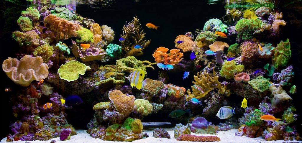types of fish tanks - Coral reef aquarium