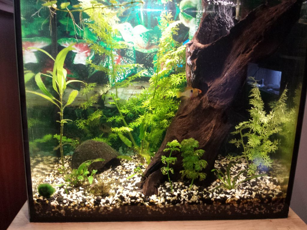 10 gallon fish tank setup and other required information