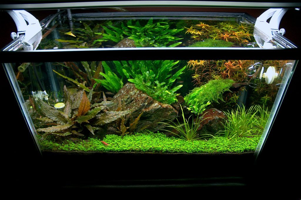 10 gallon fish tank setup and other required information for 20 gallon fish tank size