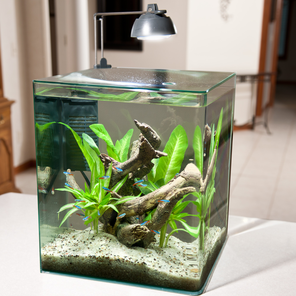 Best 5 gallon fish tank and aquarium kit for sale now for 5 gallon glass fish tank
