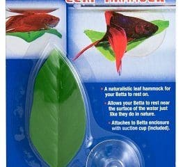 betta fish accessories