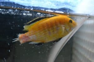 fin tail rot