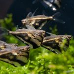 19 Most Popular Freshwater Fish for Your Aquarium