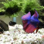 How To Choose Betta Fish Name? Best Betta Fish Names
